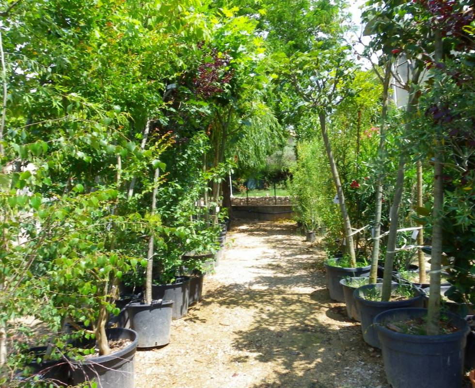 vente d 39 arbres fruitiers oliviers cerisiers aix en provence p pini re jeanselme. Black Bedroom Furniture Sets. Home Design Ideas