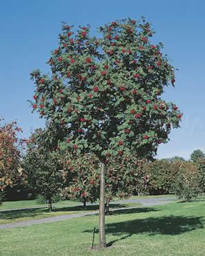 Vente d 39 arbres fruitiers oliviers cerisiers aix en provence p pini re jeanselme - Eloigner les oiseaux des arbres fruitiers ...